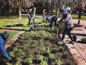 Volunteers digging and planting plants at park
