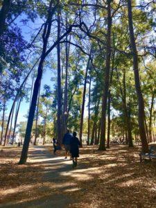 tree line pathway in park